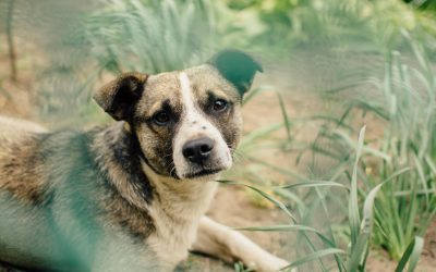 Do You Need a Pet Emergency Fund?